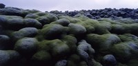 "Close-up of moss on rocks, Iceland by Panoramic Images - 36"" x 12"""