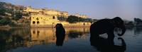"Silhouette of two elephants in a river, Amber Fort, Jaipur, Rajasthan, India by Panoramic Images - 36"" x 12"""