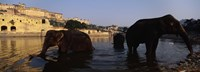 "Three elephants in the river, Amber Fort, Jaipur, Rajasthan, India by Panoramic Images - 36"" x 12"""
