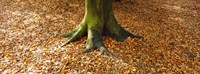 """Low section view of a tree trunk, Berlin, Germany by Panoramic Images - 36"""" x 12"""""""