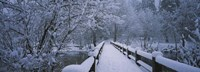 """Trees along a snow covered footbridge, Yosemite National Park, California, USA by Panoramic Images - 36"""" x 12"""""""