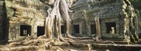 Close up of Old ruins of a building, Angkor Wat, Cambodia Fine Art Print