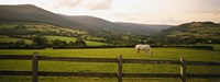 Horse in a field, Enniskerry, County Wicklow, Republic Of Ireland Fine Art Print