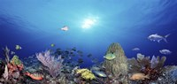 """School of fish swimming in the sea by Panoramic Images - 36"""" x 12"""", FulcrumGallery.com brand"""