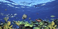 """School of fish swimming in the sea, Digital Composite by Panoramic Images - 36"""" x 12"""", FulcrumGallery.com brand"""