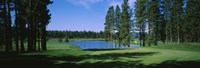 """Trees on a golf course, Edgewood Tahoe Golf Course, Stateline, Nevada, USA by Panoramic Images - 36"""" x 12"""", FulcrumGallery.com brand"""