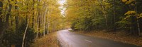 Road passing through a forest, Park Loop Road, Acadia National Park, Mount Desert Island, Maine, USA Fine Art Print