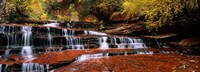 Waterfall in a forest, North Creek, Zion National Park, Utah, USA Fine Art Print