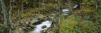 Stream through the Forest, New Hampshire by Panoramic Images - various sizes