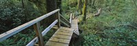 "Wooden Path in Pacific Rim National Park by Panoramic Images - 36"" x 12"""