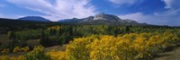 "Valley of Trees in Wateron Lakes by Panoramic Images - 36"" x 12"""
