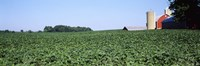 """Soybean Field and Barn in Kent County by Panoramic Images - 36"""" x 12"""""""