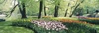 Flowers in a garden, Keukenhof Gardens, Netherlands Fine Art Print