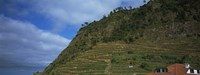 """Low angle view of terraced fields on a mountain, Ponta Delgada, Madeira, Portugal by Panoramic Images - 36"""" x 12"""""""