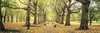 Trees along a footpath in a park, Green Park, London, England Fine Art Print