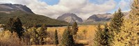 Trees in a field, US Glacier National Park, Montana, USA Fine Art Print