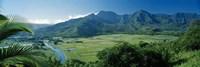 High angle view of taro fields, Hanalei Valley, Kauai, Hawaii, USA Framed Print