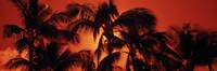 Palm trees at dusk, Kalapaki Beach, Hawaii Fine Art Print