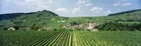 "Vineyards near a village, Oberbergen, Der Vogelsangpass, Bereich Kaiserstuhl, Baden-Wurttemberg, Germany by Panoramic Images - 36"" x 12"" - $34.99"