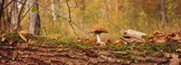 Mushroom on a tree trunk, Baden-Wurttemberg, Germany Fine Art Print