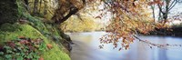 "Trees along a river, River Dart, Bickleigh, Mid Devon, Devon, England by Panoramic Images - 36"" x 12"""