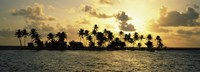 Silhouette of palm trees on an island at sunset, Laughing Bird Caye, Victoria Channel, Belize Fine Art Print