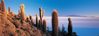 Cactus on a hill, Salar De Uyuni, Potosi, Bolivia Fine Art Print