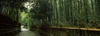 "Road passing through a bamboo forest, Arashiyama, Kyoto Prefecture, Kinki Region, Honshu, Japan by Panoramic Images - 36"" x 12"""