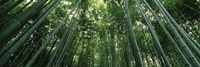 Low angle view of bamboo trees, Arashiyama, Kyoto Prefecture, Kinki Region, Honshu, Japan Fine Art Print