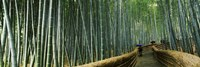 """Stepped walkway passing through a bamboo forest, Arashiyama, Kyoto Prefecture, Kinki Region, Honshu, Japan by Panoramic Images - 36"""" x 12"""""""