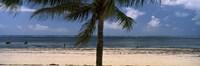 "Palm tree on the beach, Malindi, Coast Province, Kenya by Panoramic Images - 36"" x 12"""