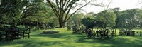 """Chairs and tables in a lawn, Lake Naivasha Country Club, Great Rift Valley, Kenya by Panoramic Images - 36"""" x 12"""""""