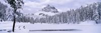 "Trees along a frozen lake, Lake Antorno, Tre Cime Di Lavaredo, Dolomites, Cadore, Province of Belluno, Veneto, Italy by Panoramic Images - 36"" x 12"""