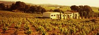 """Farmhouses in a vineyard, Penedes, Catalonia, Spain by Panoramic Images - 36"""" x 12"""" - $34.99"""