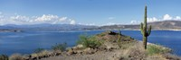 Cactus at the lakeside with a mountain range in the background, Lake Pleasant, Arizona, USA by Panoramic Images - various sizes