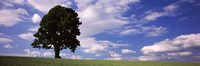 "Tree in a field with woman walking along with balloons, Baden-Wurttemberg, Germany by Panoramic Images - 36"" x 12"" - $34.99"