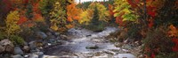 Stream with trees in a forest in autumn, Nova Scotia, Canada Fine Art Print