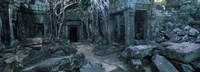 Overgrown tree roots on ruins of a temple, Ta Prohm Temple, Angkor, Cambodia Fine Art Print
