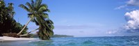 """Palm trees on the beach, Indonesia by Panoramic Images - 36"""" x 12"""" - $34.99"""