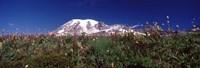 "Wildflowers on mountains, Mt Rainier, Pierce County, Washington State, USA by Panoramic Images - 36"" x 12"""