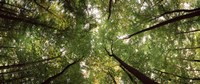 """Low angle view of trees with green foliage, Bavaria, Germany by Panoramic Images - 36"""" x 12"""""""