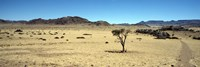 "Horse ranch on a homestead, Namibia by Panoramic Images - 36"" x 12"""