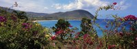 """Tropical flowers at the seaside, Deshaies Beach, Deshaies, Guadeloupe by Panoramic Images - 36"""" x 12"""" - $34.99"""