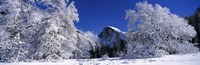 Half Dome, Yosemite National Park, Mariposa County, California Fine Art Print