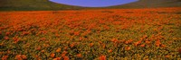 Orange Wildflowers on a landscape, California by Panoramic Images - various sizes