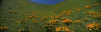 """Orange Wildflowers on a hillside, California by Panoramic Images - 36"""" x 12"""""""