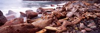 "Driftwood on the beach, Oregon Coast, Oregon, USA by Panoramic Images - 36"" x 12"", FulcrumGallery.com brand"