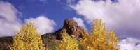 """Clouds above aspen trees in autumn, Colorado by Panoramic Images - 36"""" x 12"""""""