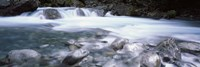 River, Hollyford River, Fiordland National Park, South Island, New Zealand by Panoramic Images - various sizes