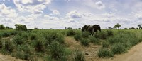 """African elephants (Loxodonta africana) in a field, Kruger National Park, South Africa by Panoramic Images - 36"""" x 12"""""""